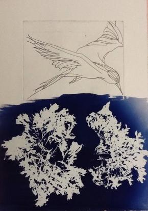Tern & Seaweed